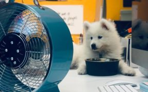 pet-friendly workplace